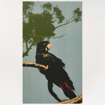 Image for Plywood Panel | Red Tailed Black Cockatoo