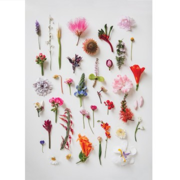 Image for A4 Print | Garden Foraging