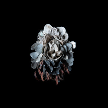 Image for F*#k Cluster Brooch 2 – paph, cymbidium and orchid parts, gum leaves, banksia seed pod, orchid tongues', succulent leaves | 2021